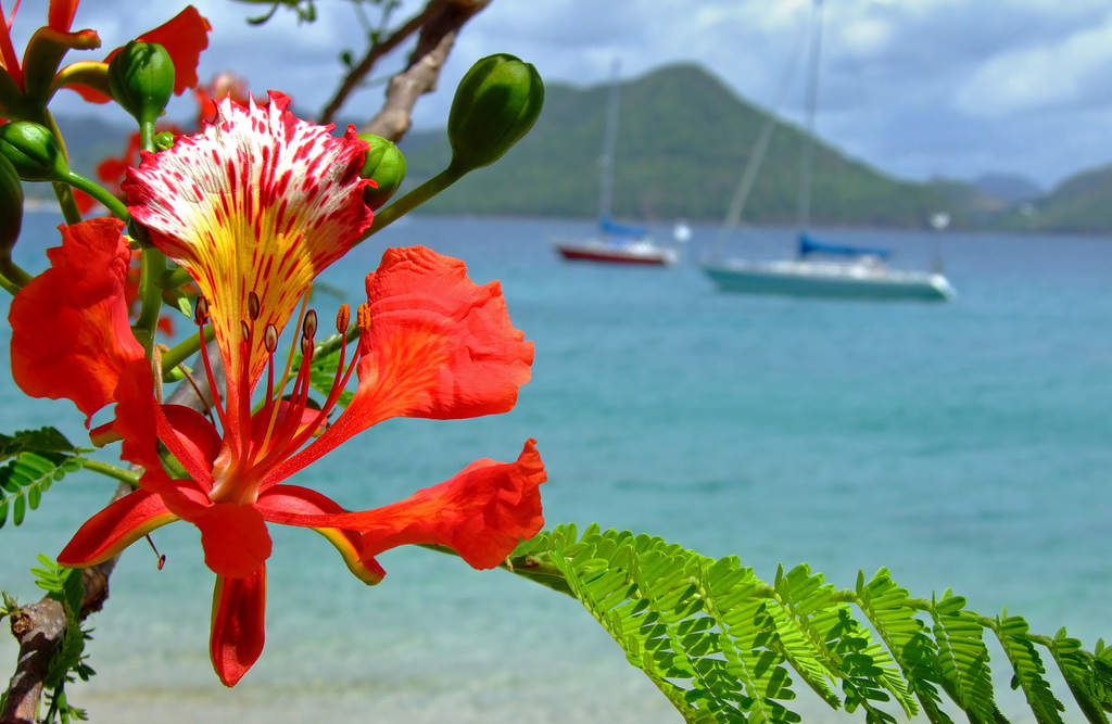 12 Amazing Things to Do in St. Lucia | Ecotourism and Sustainable Travel